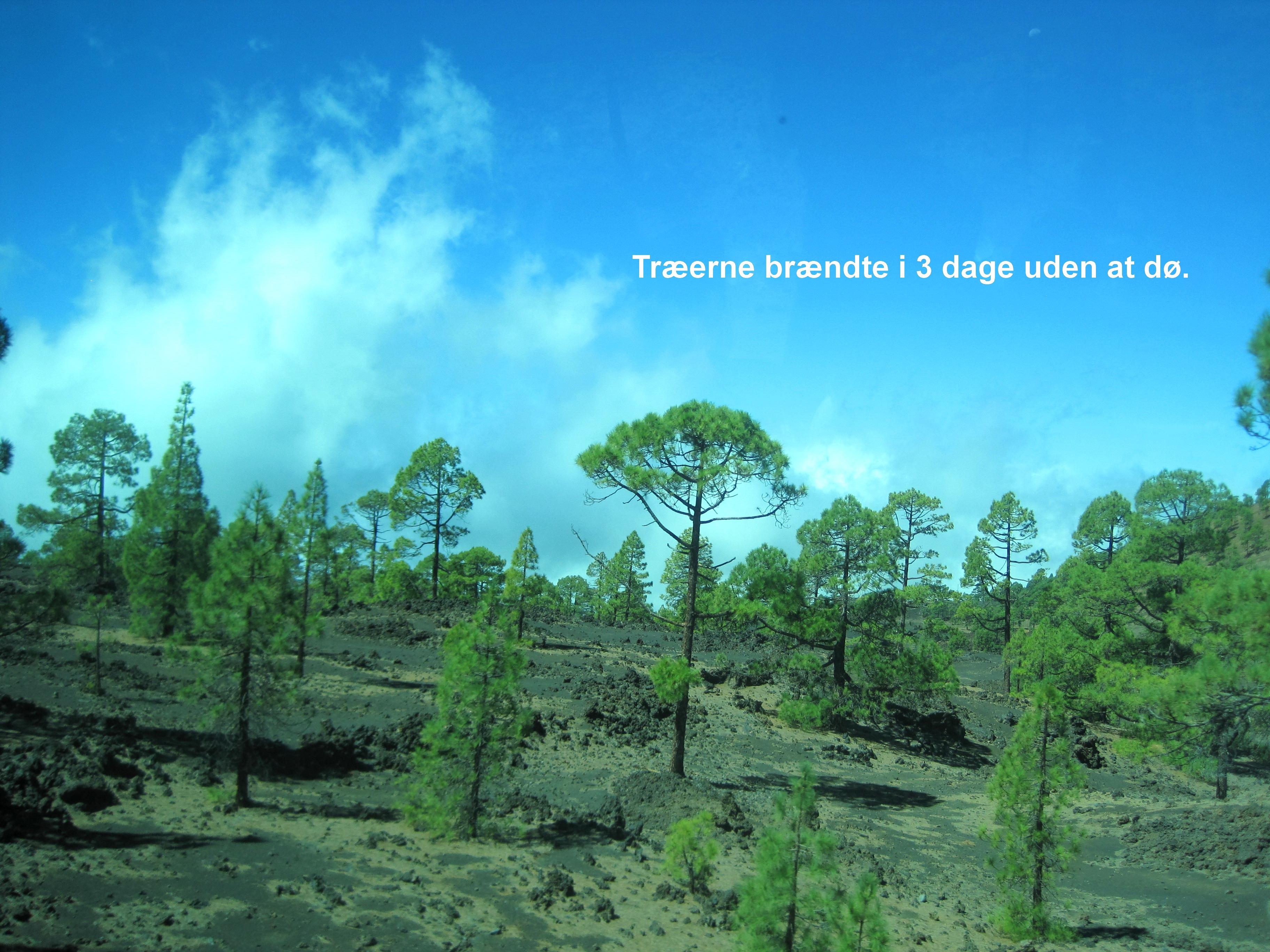 Træerne brændte